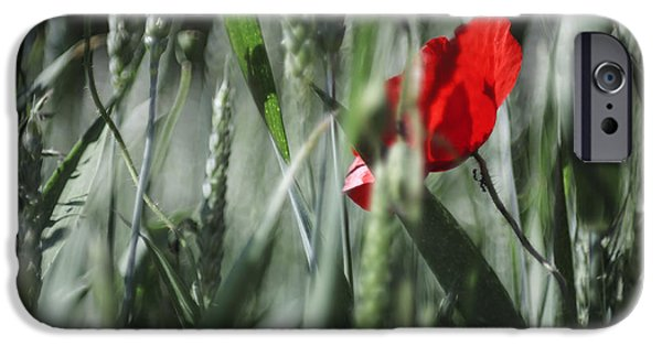 Plant iPhone Cases - Poppy Flower iPhone Case by Maria Bobrova