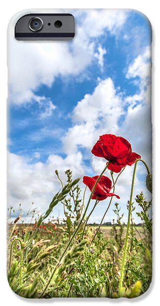 World War One iPhone Cases - Poppy in the field iPhone Case by Alex Hiemstra