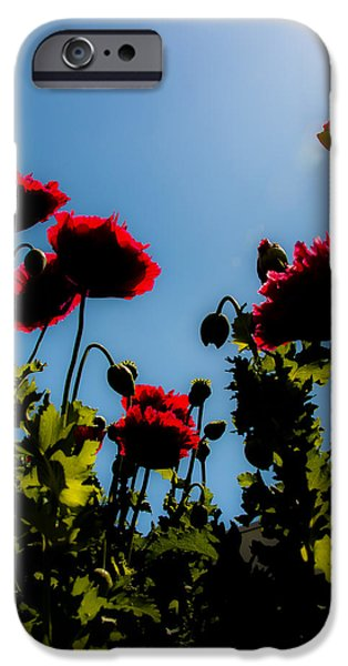 World War One iPhone Cases - Poppy Part 2 iPhone Case by Alex Hiemstra