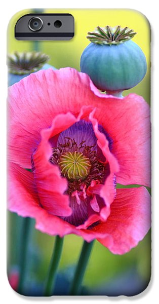 Meadow Photographs iPhone Cases - Poppy Flower Study iPhone Case by Rumyana Whitcher