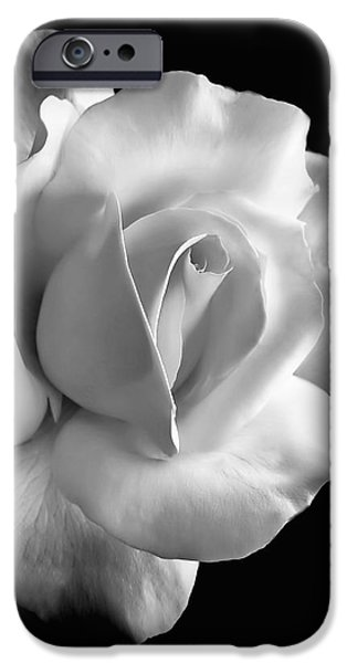 Rose Petals iPhone Cases - Porcelain Rose Flower Black and White iPhone Case by Jennie Marie Schell