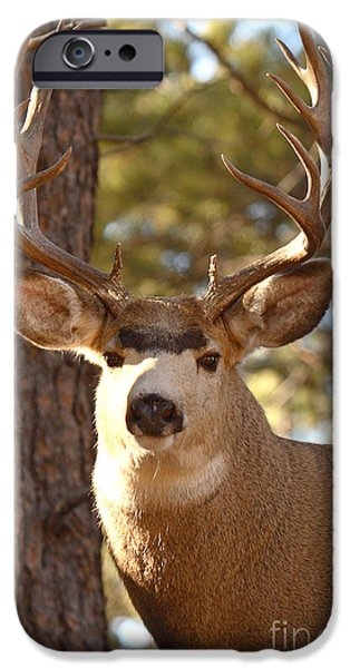 Portrait of a 15-point Buck iPhone Case by Max Allen