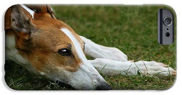 Rescued Greyhound iPhone Cases - Portrait of a Greyhound - Soulful iPhone Case by Angela Rath