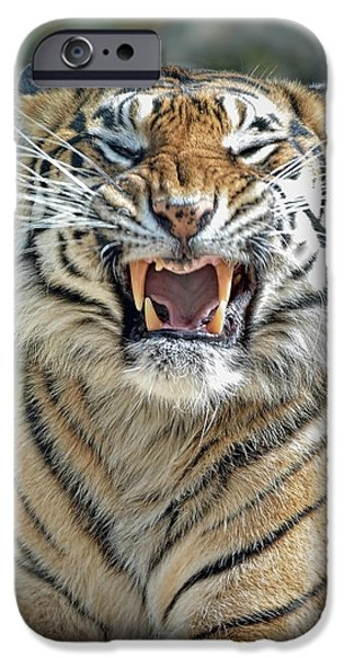 Beautiful Cat Drawings iPhone Cases - Portrait of a Growling Tiger  iPhone Case by Jim Fitzpatrick