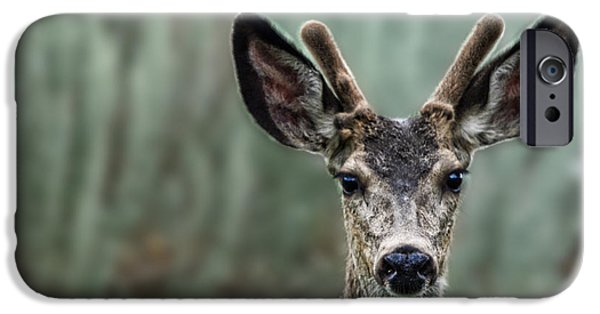 Four Animal Faces iPhone Cases - Portrait of a Male Deer iPhone Case by Jim Fitzpatrick