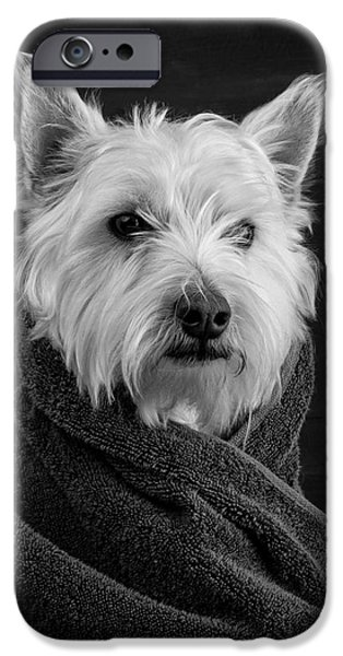 Puppies iPhone Cases - Portrait of a Westie Dog iPhone Case by Edward Fielding