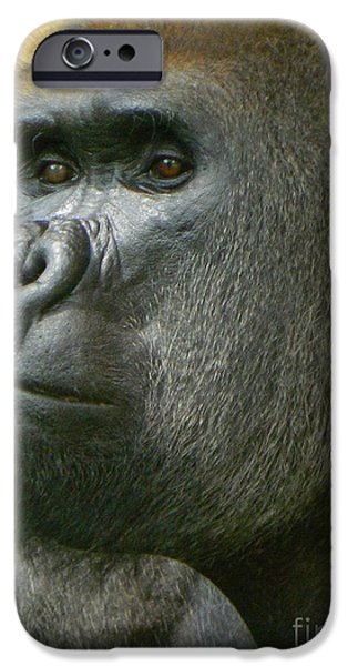 Smithsonian iPhone Cases - Portrait of Baraka - A Silverback Gorilla iPhone Case by Emmy Marie Vickers