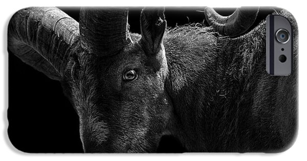 Recently Sold -  - Animals Photographs iPhone Cases - Portrait of East Caucasian Tur in black and white  iPhone Case by Lukas Holas