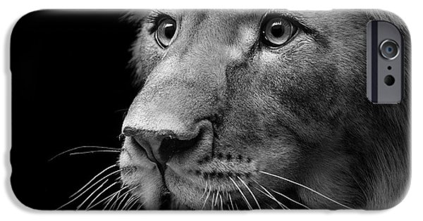 Lions Photographs iPhone Cases - Portrait of Lion in black and white II iPhone Case by Lukas Holas