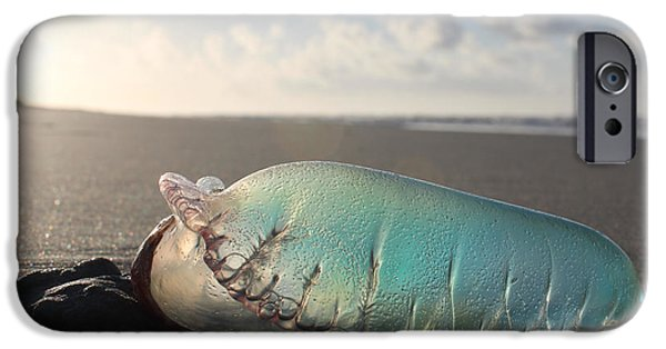 Beach iPhone Cases - Portuguese Man o War iPhone Case by Robert Yaeger
