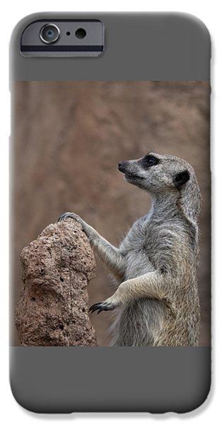 Meerkat iPhone Cases - Pose of the Meerkat iPhone Case by Ernie Echols