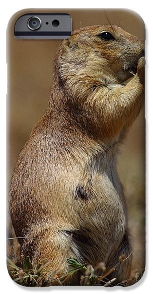 Nebraska iPhone Cases - Prairie Dog - Cold Day iPhone Case by Robert Frederick
