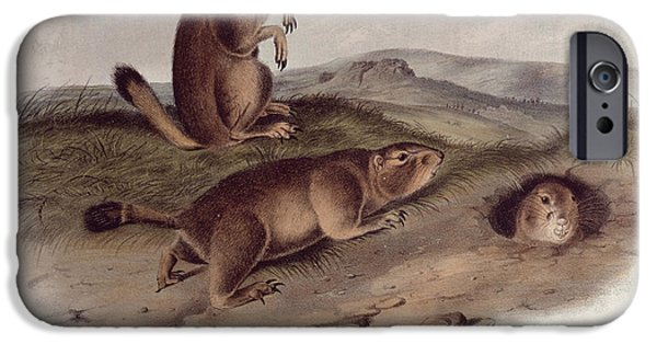 Animal Drawings iPhone Cases - Prairie Dog iPhone Case by John James Audubon