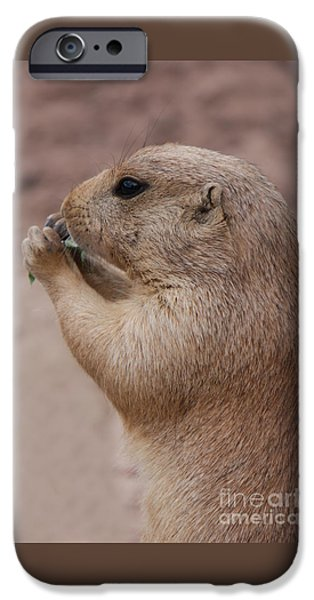 Dog Close-up iPhone Cases - Prairie Dog iPhone Case by Mickey At Rawshutterbug