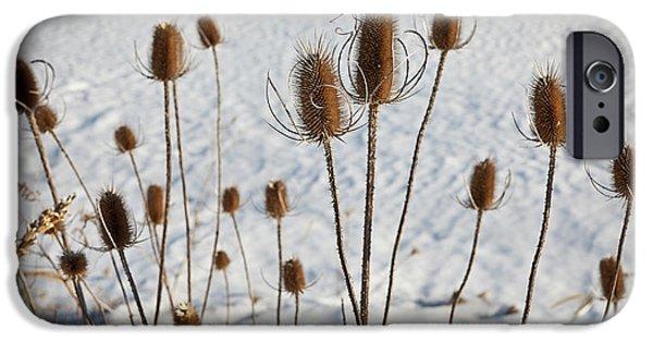 Winter iPhone Cases - Prairie Seedheads iPhone Case by Steve Gadomski