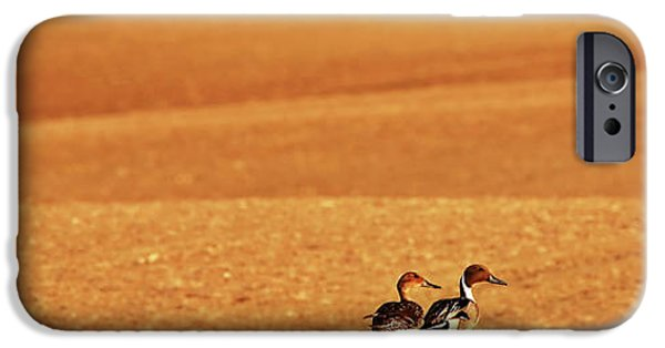Winter Storm iPhone Cases - Prairie Storm and ducks Canada iPhone Case by Mark Duffy