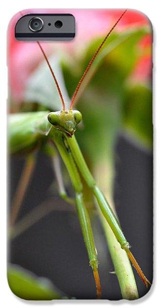 Mantodea iPhone Cases - Praying Mantis 3 iPhone Case by Noah Cole