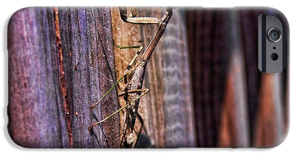 Mantodea iPhone Cases - Praying Mantis iPhone Case by Alexander Butler
