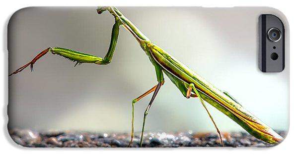 Mantises iPhone Cases - Praying Mantis  iPhone Case by Bob Orsillo