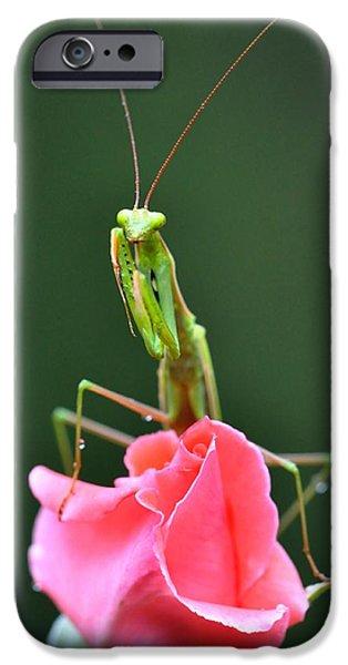Mantodea iPhone Cases - Praying Mantis iPhone Case by Noah Cole