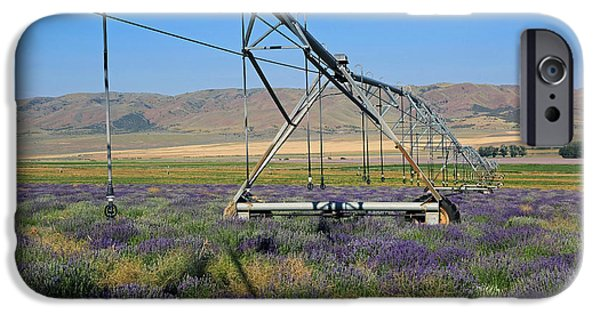 Agriculture iPhone Cases - Precious Gift iPhone Case by Donna Kennedy