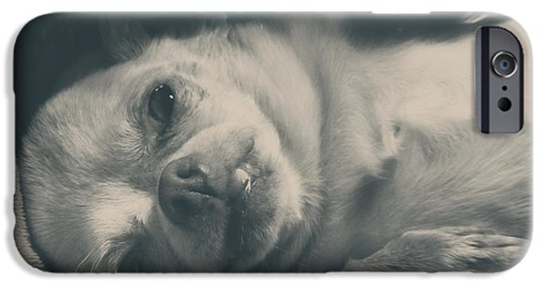 Black Dog iPhone Cases - Precious iPhone Case by Laurie Search