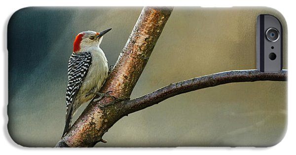 Woodpecker iPhone Cases - Pretty Lady iPhone Case by Lois Bryan