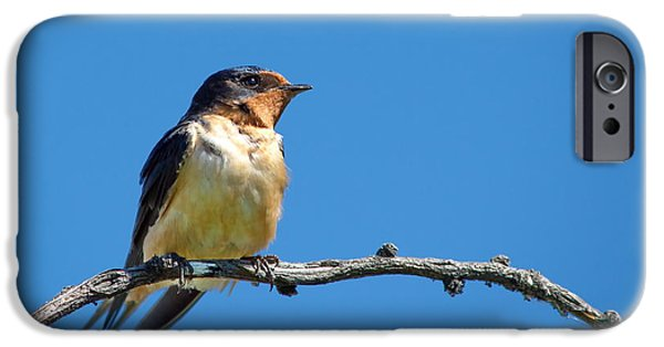 Barn Swallow iPhone Cases - Pretty Percher iPhone Case by Crystal Massop