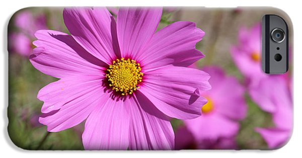 Floral Photographs iPhone Cases - Pretty Pink Cosmos iPhone Case by Carol Groenen