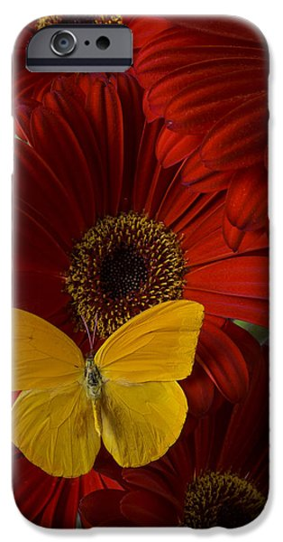 Insects Photographs iPhone Cases - Pretty Yellow Butterfly iPhone Case by Garry Gay