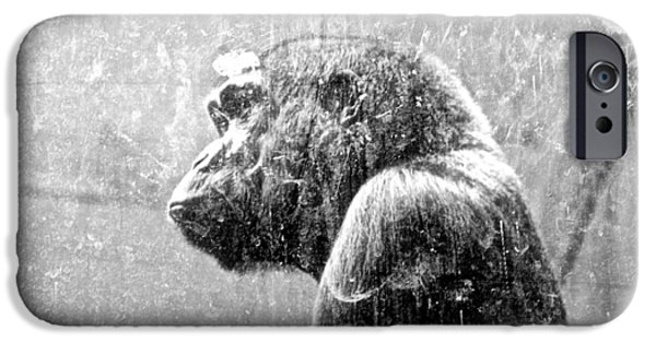 Smithsonian National Zoological Park iPhone Cases - Pride Behind Glass iPhone Case by Patrick Lyon