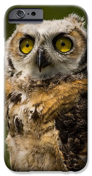 Baby Bird iPhone Cases - Pride iPhone Case by Don Cortell