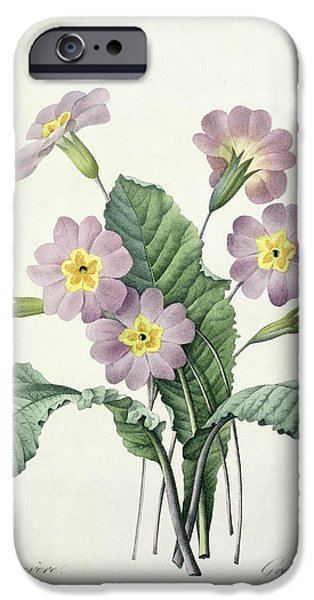 Plant Drawings iPhone Cases - Primrose iPhone Case by Pierre Joseph Redoute