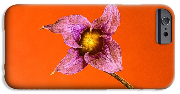 Princess Diana iPhone Cases - Princess Diana Clematis Blossom iPhone Case by Douglas Barnett