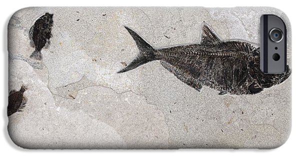 Cut-outs iPhone Cases - Priscacara And Diplomistus Fossil Fish iPhone Case by Dirk Wiersma