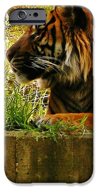 Smithsonian iPhone Cases - Profile of a Tiger iPhone Case by CL Redding