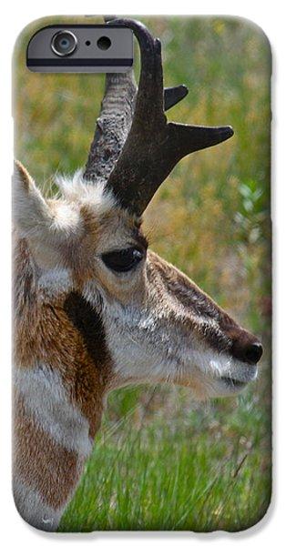 Pronghorn Buck profile iPhone Case by Karon Melillo DeVega