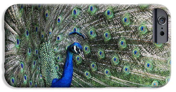 Arkansas iPhone Cases - Proud Peacock iPhone Case by Tony Colvin