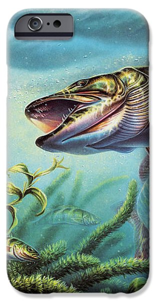 Provoked Musky iPhone Case by Jon Q Wright