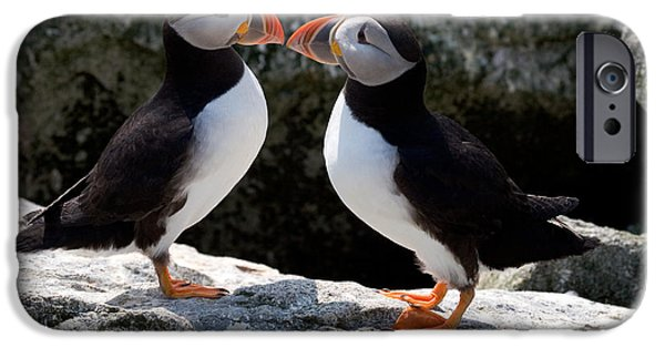 Gulf Of Maine iPhone Cases - Puffin Love iPhone Case by Brent L Ander