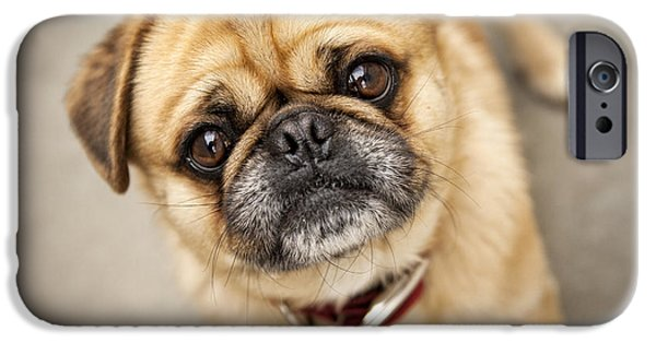 Dog Close-up iPhone Cases - Pug dog 2 iPhone Case by Mike Santis