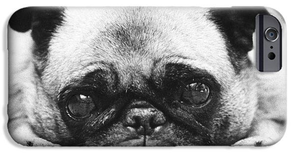 Animal Portraiture iPhone Cases - Pug Dog iPhone Case by Lynn Lennon
