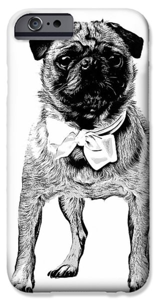 Cute Puppy iPhone Cases - Pug iPhone Case by Edward Fielding