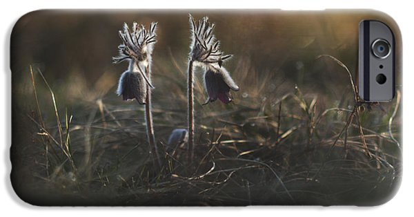 Macro iPhone Cases - Pulsatilla nigricans iPhone Case by Davorin Mance