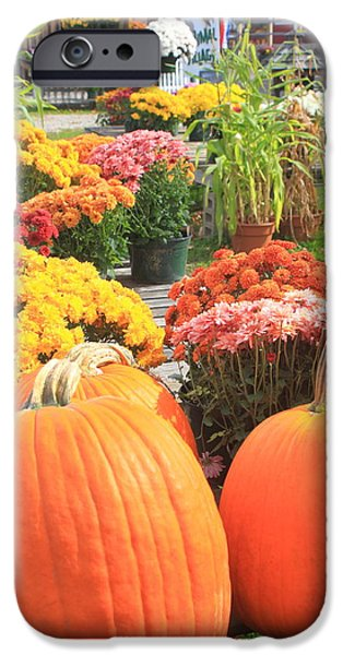 Farmstand iPhone Cases - Pumpkins and Mums in Farmstand iPhone Case by John Burk