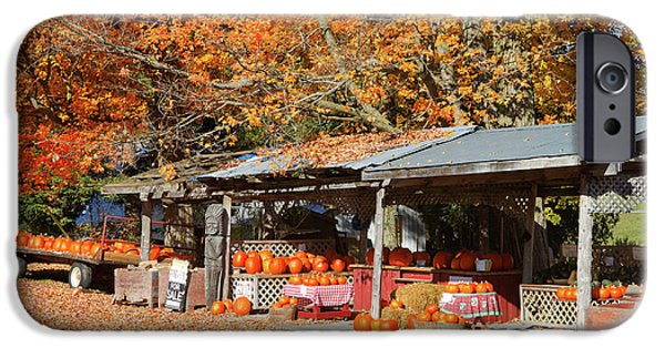 Shed iPhone Cases - Pumpkins For Sale iPhone Case by Louise Heusinkveld
