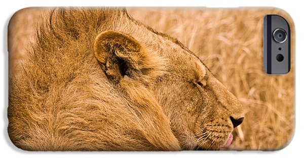 Ngorongoro Crater iPhone Cases - Punk Mane iPhone Case by Adam Romanowicz