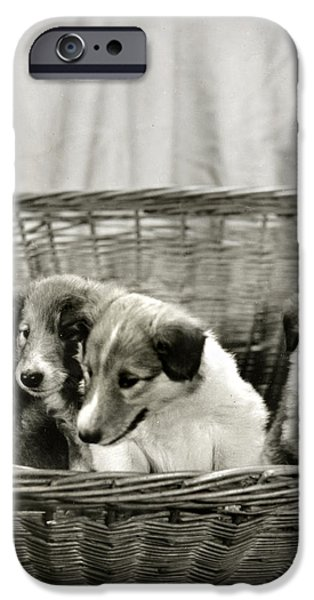 Puppies of the Past iPhone Case by Marilyn Hunt