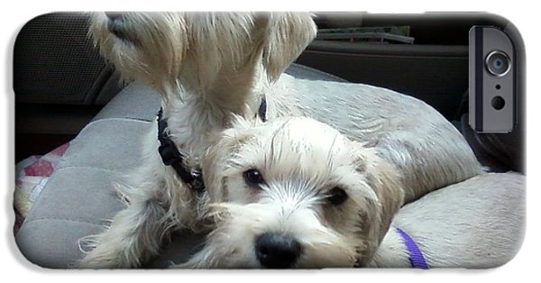 Puppies iPhone Cases - Puppies on a Sunday Drive iPhone Case by Robin McCown
