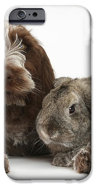 Puppy And Rabbt iPhone Case by Mark Taylor